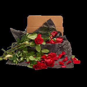 dead flower box, dead rose box gift