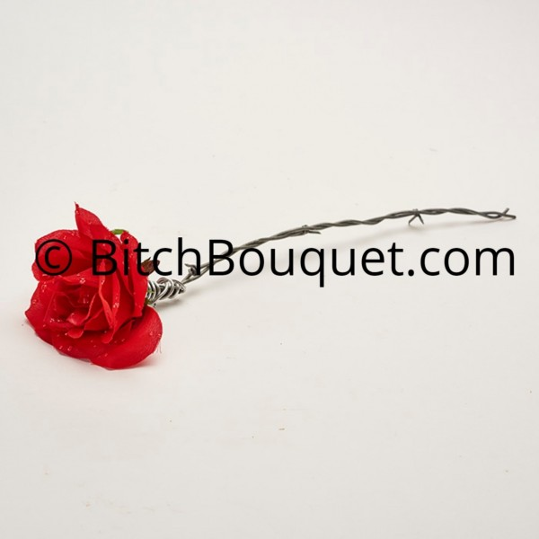 Blood Barbed wire rose